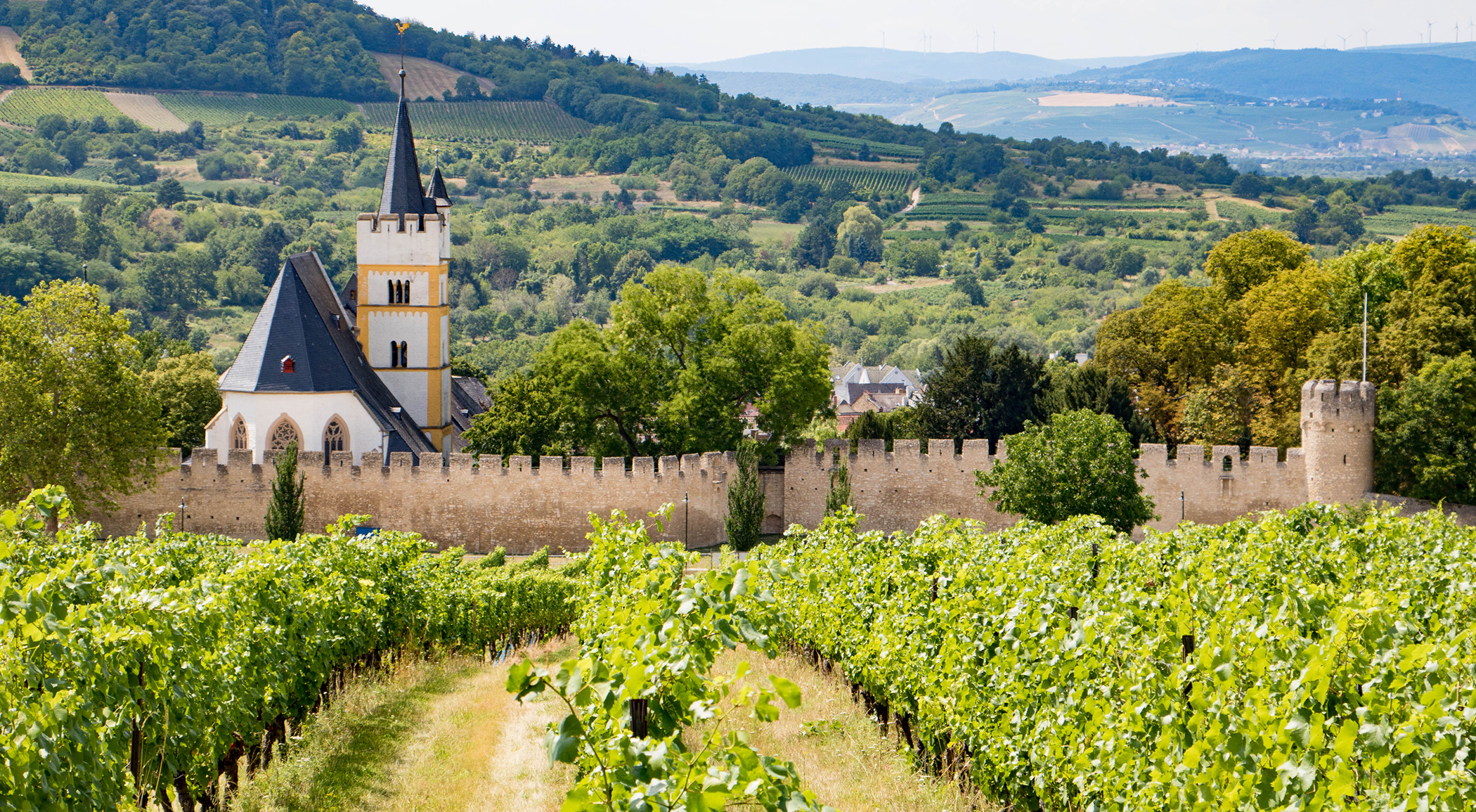Weinberge mit Burgkirche in Ingelheim